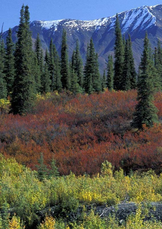 Scenic forests and mountain vistas in Alaska's Far North