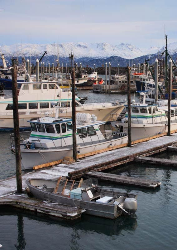 Boats in the Homer harbor