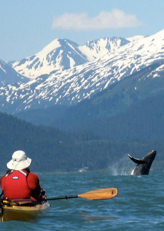 Watch whales in Resurrection Bay