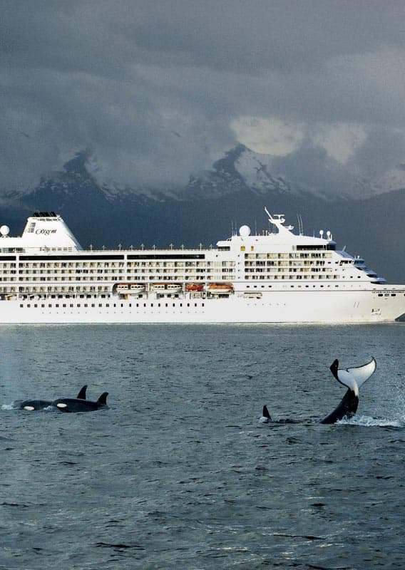 Cruise ship and orca whales