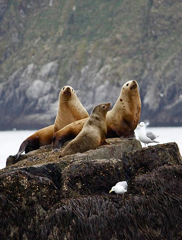 Marine Wildlife Viewing off to a great start for the Kenai Fjords Team!