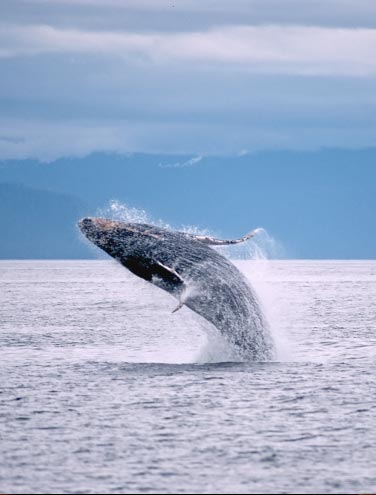 7 Tips for an Amazing Whale Watching Trip