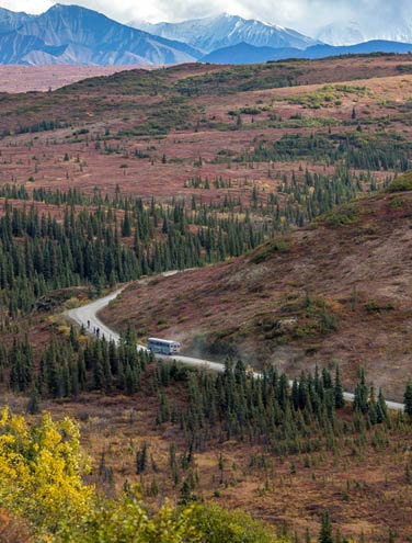8 Highlights of the Denali Park Road