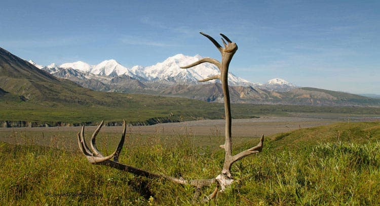 Antlers resting in the grass with mountain backdrop