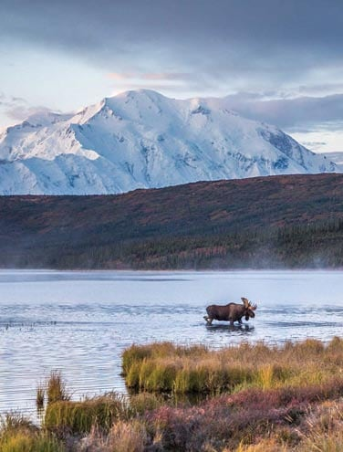 How to Spot the Big 5 in Denali: Wildlife-watching tips from our pros