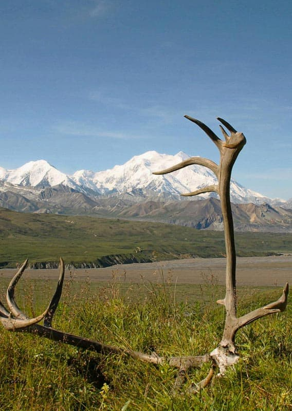Antlers resting in the grass with a mountain backdrop