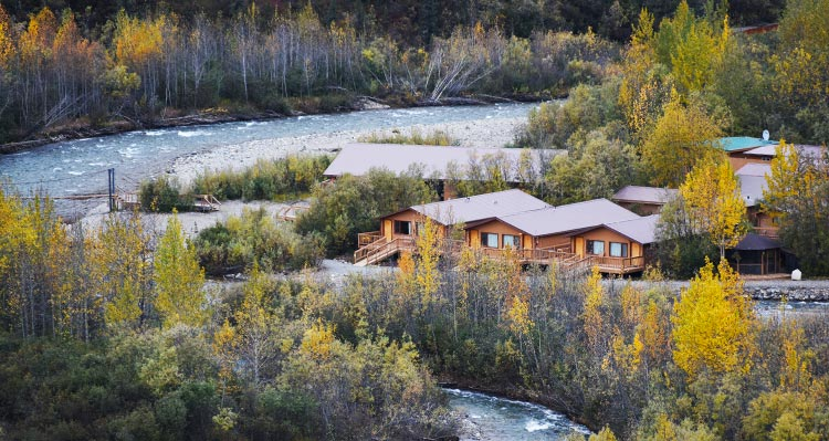 A view of the Denali Backcountry Lodge buildings alongside a rushing blue creek, surrounded by yellow and green trees.