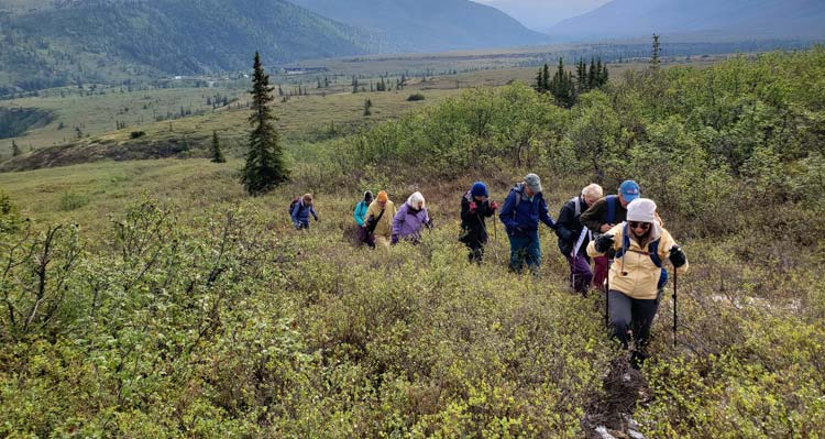 A group of hikers walk through low-growing shrubs in a tundra landscape.