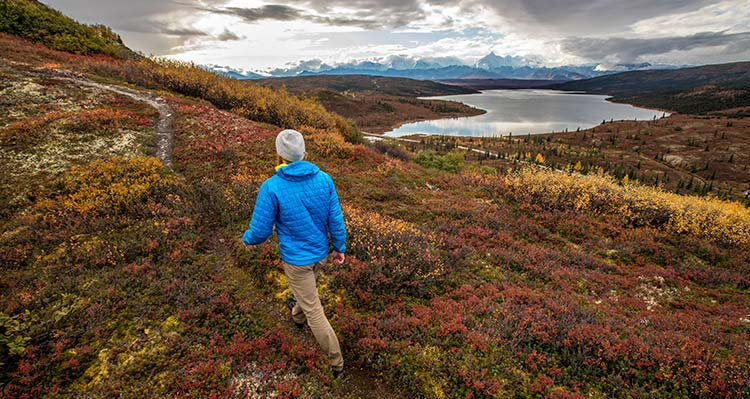 A person walks on a tundra pathway between low-growing plants.