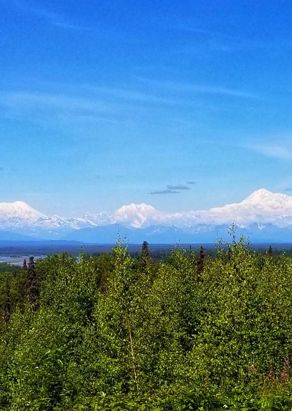 A wide view of the Alaska Range of mountains from a green forest
